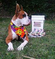 Wet Noses Peanut Butter Molasses Dog Treats - 14 oz. uploaded by Fatima v.