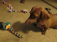 Grreat ChoiceA Loop & Ball Dog Toy uploaded by Brenda F.