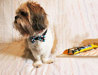 Pedigree® Dentastix® Daily Oral Care Treats uploaded by Corco S.