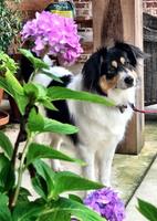 Furminator FURminatorA Long Hair Deshedding Dog Tool uploaded by Amanda M.