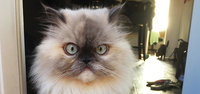 Fresh Step Scoopable Clumping Cat Litter uploaded by Kayla J.