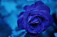 LUSH Rose Jam Shower Gel uploaded by Deepak Y.