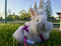 Kaytee Timothy Complete Rabbit Food (4.5 lbs.) uploaded by Camila T.