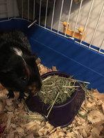 Kaytee Natural Timothy Hay uploaded by Tara B.