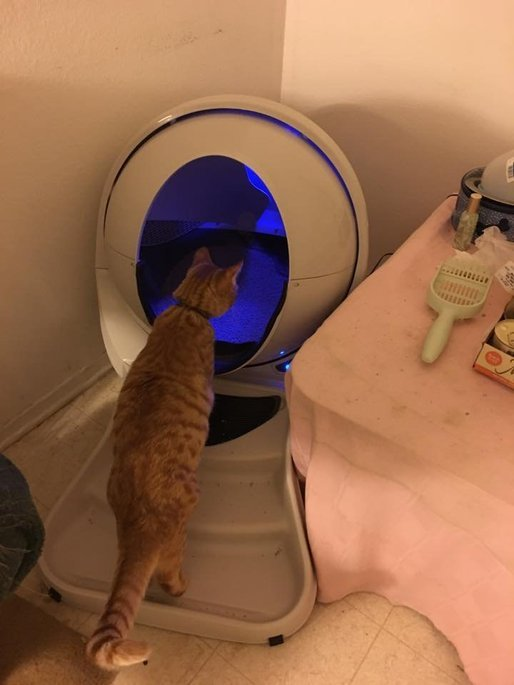 Litter Robot LRII Automatic Self-Cleaning Litter Box [Gray] uploaded by Michelle R.