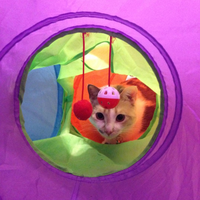 Toys R Us Tunnel Pop Up Cat Toy uploaded by Hannah B.