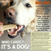 MilkBone Flavor Snacks Dog Biscuits uploaded by member-9b7e52667