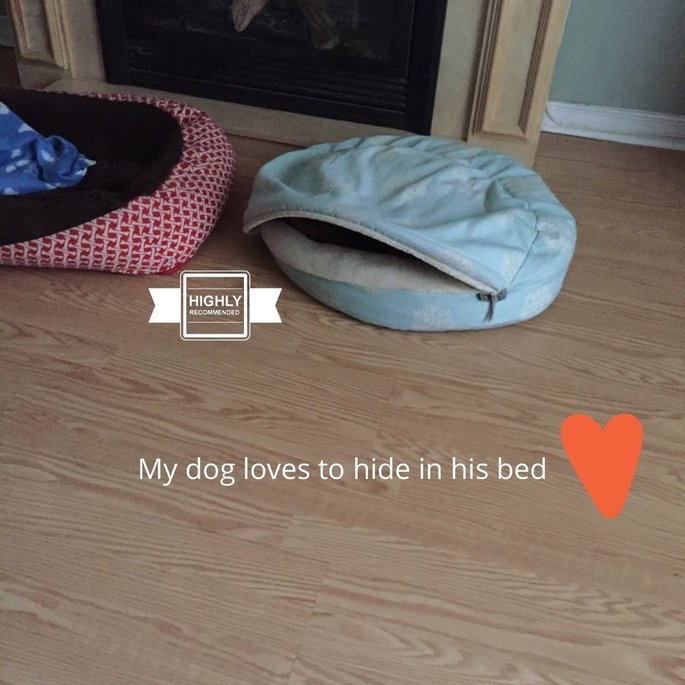 Snoozer Luxury Cozy Cave Pet Bed uploaded by Samantha R.