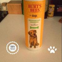 Burt's Bees Deodorizing Dog Shampoo uploaded by Heather U.