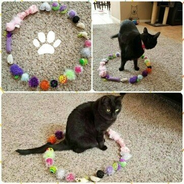 SmartyKat Skitter Critters Cat Toy uploaded by Jessica B.