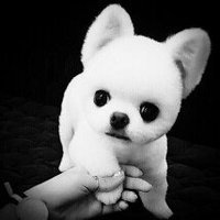 Dog Love It Rubber Dumbell Pawprint Sqeaker Toy uploaded by member-d86362c05