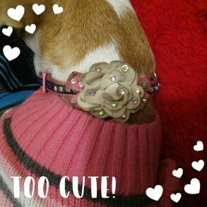 Photo of Top PawA Bella Floral Dog Collar uploaded by Maria M.