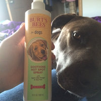 Burt's Bees For Dogs Soothing Hot Spot Spray uploaded by Kayla P.