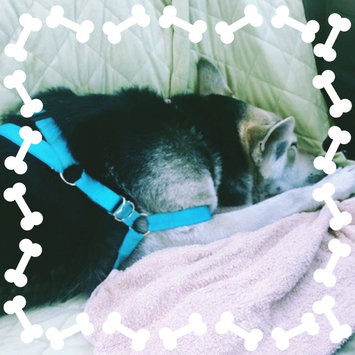 Photo of Grreat ChoiceA Dog Harness uploaded by Kristine L.