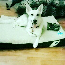 Photo of Top Paw Double Orthopedic Pet Bed uploaded by Paige H.