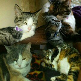 Photo of 9 Lives Long Life Formula Cat Food With Real Chicken & Turkey For Maturing Cats uploaded by Kyla R.