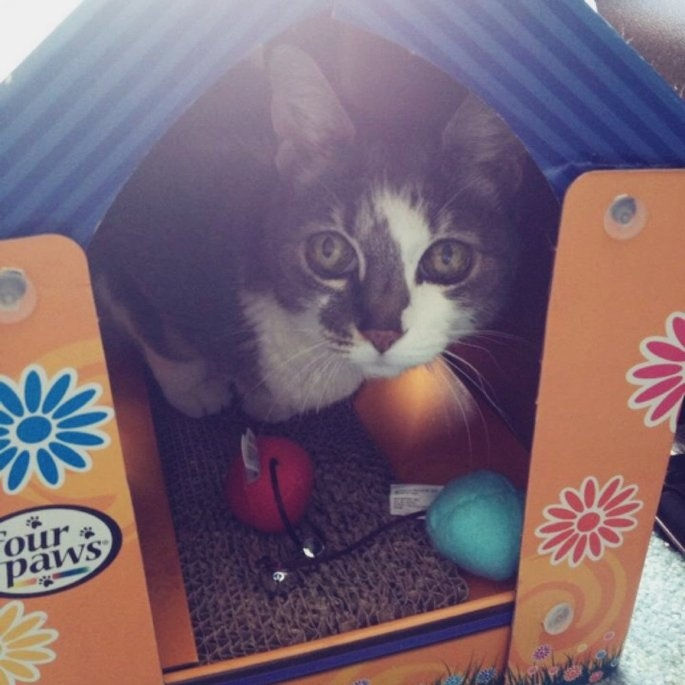 Four Paws Pet Products Fou Cat Scratcher House uploaded by Michelle H.