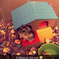 Petco 2-Story Hamster House (6