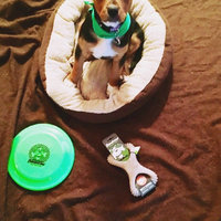 Benebone Bacon Flavored Dental Chew Toy uploaded by Jessica S.