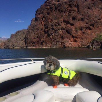 Photo of Paws Aboard Neon Yellow Doggy Life Jacket uploaded by Bre M.