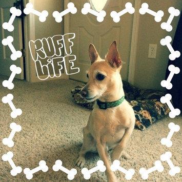 KONGA Comfort Dog Collar uploaded by Tiffany B.
