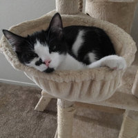 Kitty Mansions Boston Cat Tree - Brown uploaded by Nethania P.