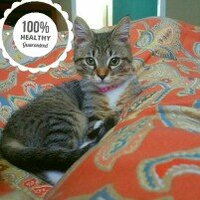 AuthorityA Hairball Control Adult Cat Food uploaded by Sheila E.
