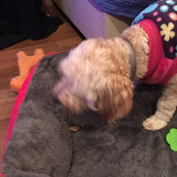 Wet Noses Pumpkin Organic Dog Treat uploaded by Vannessa A.