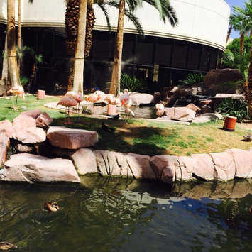 The Flamingo Las Vegas  uploaded by 👑🎀Nelly G.