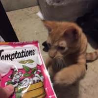 Whiskas Temptations Blissful Catnip Flavor Cat Treats uploaded by Nicole c.