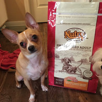 Nutro® Small Breed Adult Chicken, Whole Brown Rice & Oatmeal Recipe Dog Food 8 lb. Bag uploaded by Melanie N.
