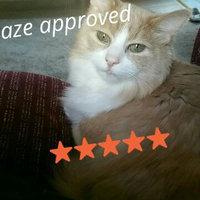 Iams™ Proactive Health™ Healthy Digestion™ Cat Food uploaded by Cydnee W.