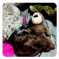 Kong Wild Knots Small-Medium Bear NKR3 uploaded by Jennifer C.