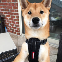 EzyDog Chest Plate Custom Fit Dog Harness uploaded by Ally M.