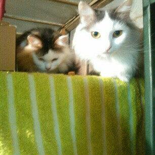 Photo of Pounce Cat Treats uploaded by Amy B.