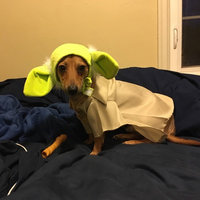 Rubies Star Wars Yoda Pet Costume uploaded by Maggie U.