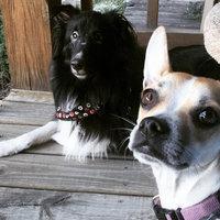 Seresto Flea & Tick Dog Collar uploaded by Julia B.