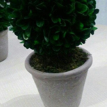Small Boxwood Topiary Green Smith & Hawken uploaded by Valerie M.