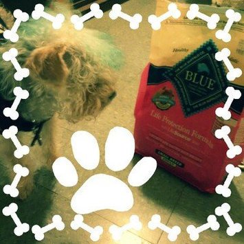 Photo of THE BLUE BUFFALO CO. BLUE™ Life Protection Formula® Chicken and Brown Rice Recipe For Adult Dogs uploaded by Martha C.