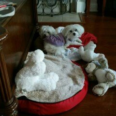 Snoozer Luxury Cozy Cave Pet Bed uploaded by Jennifer C.