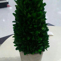 Small Boxwood Tree Green Smith & Hawken uploaded by Valerie M.