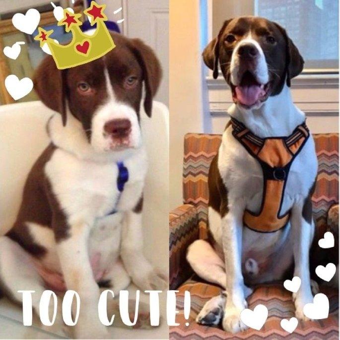 T Bonz Dog Treats uploaded by Carson M.