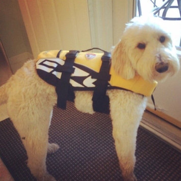 Outward Hound Life Jacket, Large, 1 ea uploaded by Katelyn M.
