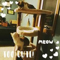 You & Me Cat Multi-Level Play Center, Regular uploaded by Joy W.