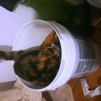 Purina Cat Chow Indoor Formula Cat Food uploaded by Megan M.