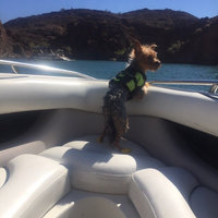 Paws Aboard Neon Yellow Doggy Life Jacket uploaded by Bre M.