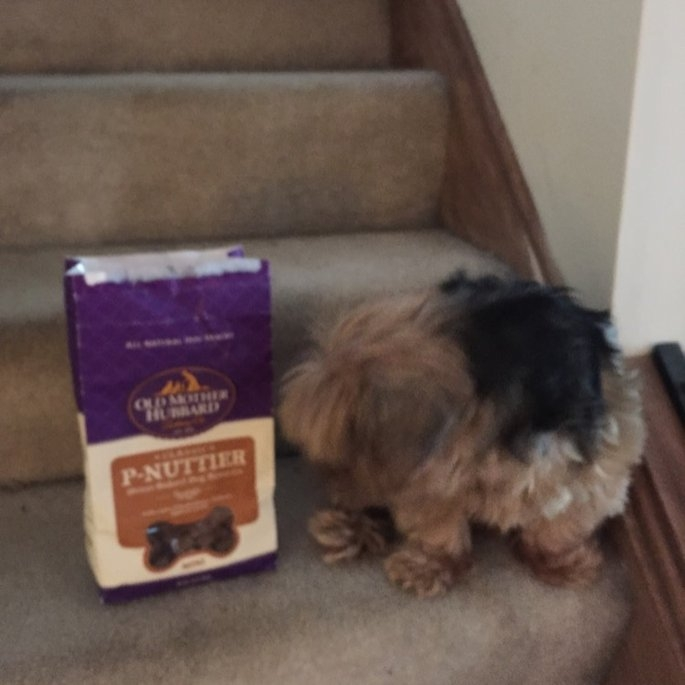 Wellness Old Mother Hubbard Classic P-Nuttier Mini Biscuits 20 oz. uploaded by Lacey L.