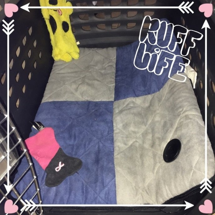 K & H Pet Products Quilted Memory Dream Pad uploaded by Léage Marie M.