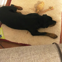 Happy Hounds Orthopedic Dog Bed Large Crimson uploaded by Arden J.