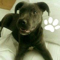 Evolve Nature's Treats Dog Treat Peanut Butter uploaded by Laura F.